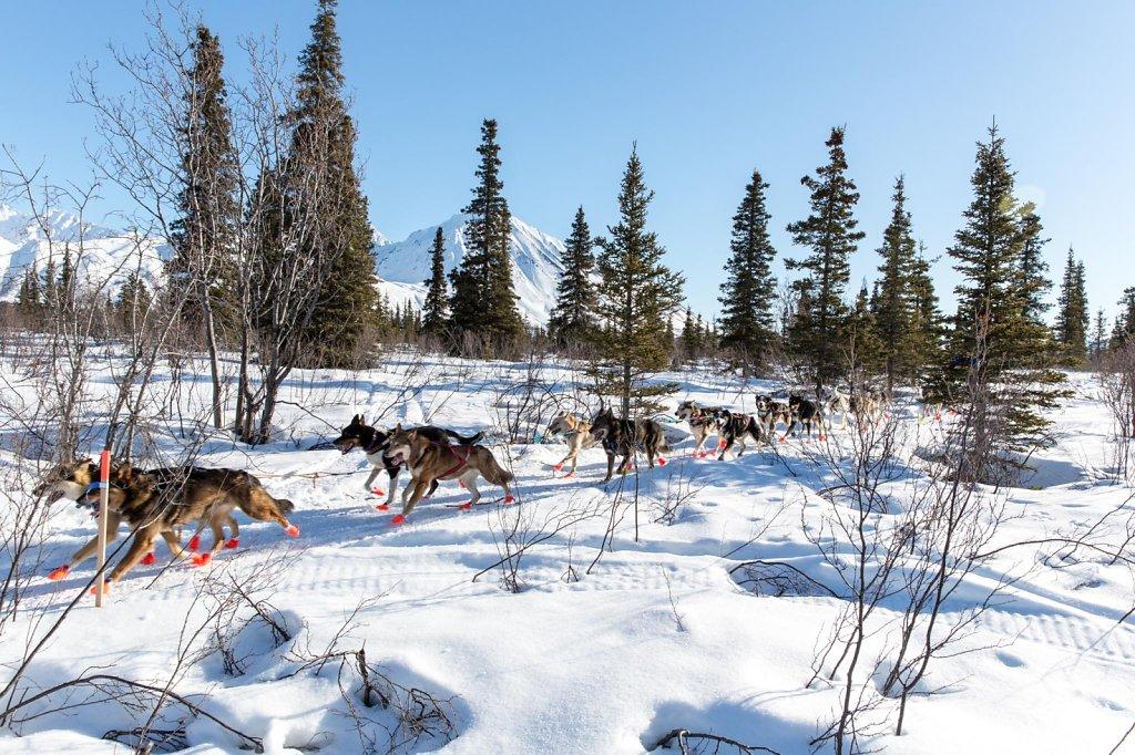 IditarodDay2-016.jpg
